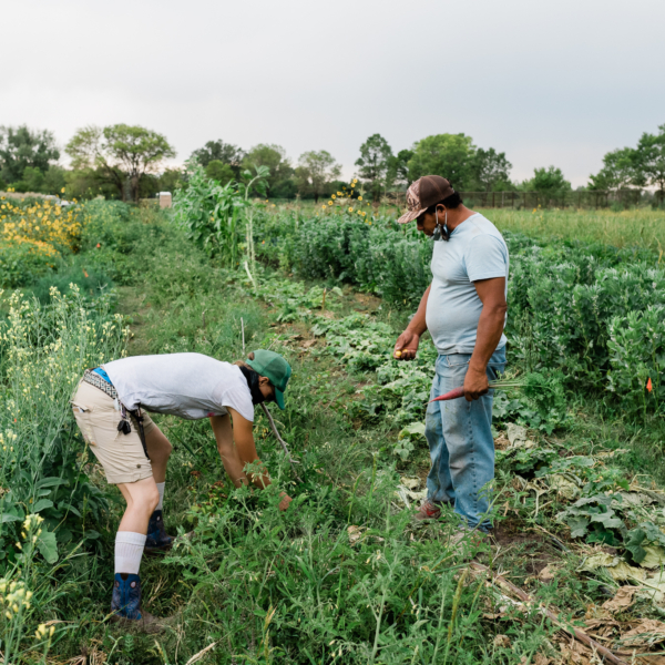 Farm Incubation and Regenerative Agriculture Education in Rural Southern Colorado